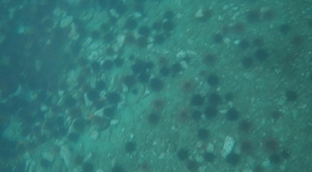 underwater langara island 2 (233).jpg