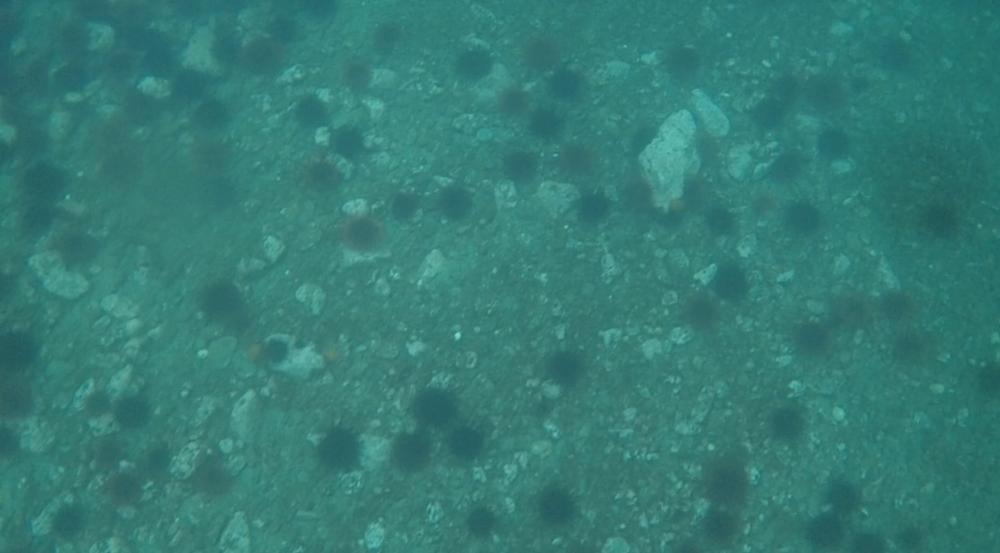 underwater langara island 2 (242).jpg