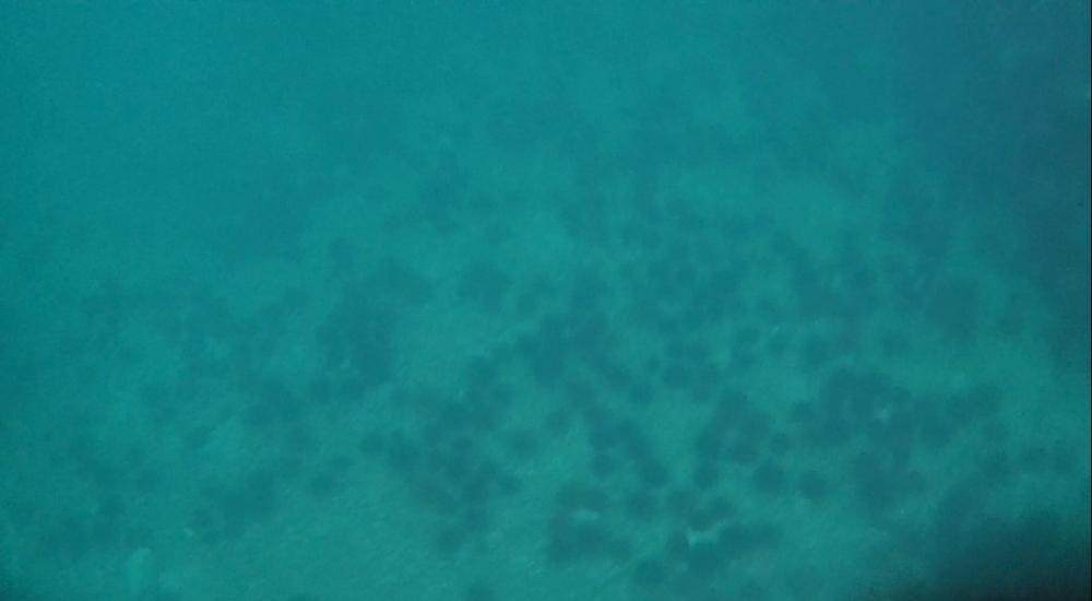 marine (141).jpg