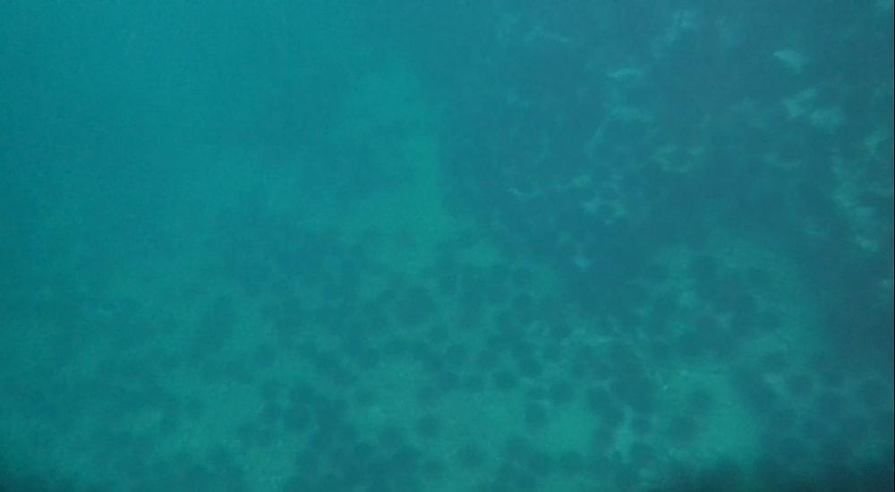marine (148).jpg