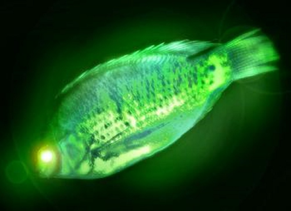 441500128_radioactive_fish_xlarge.jpg