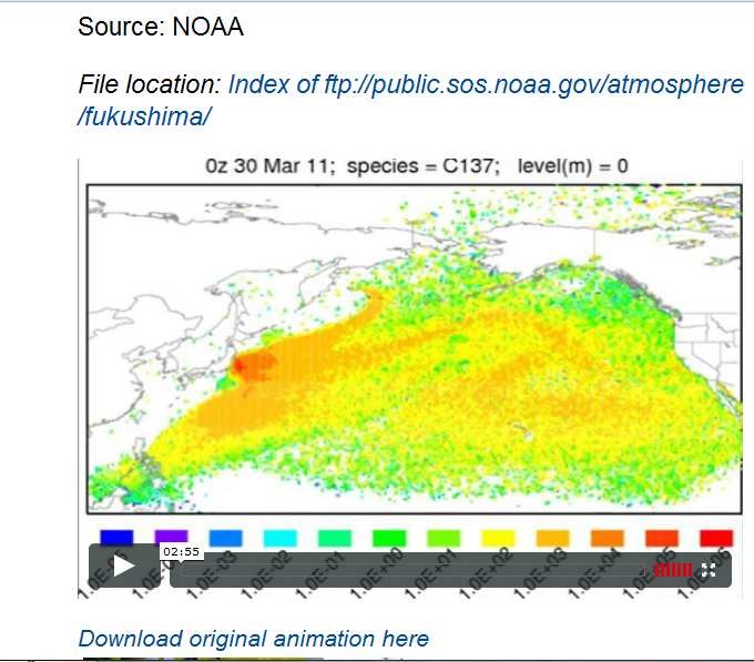 Hidden NOAA animation shows ocean all along U.S. West Coast contaminated with Fukushima cesium by end of March 2011.PNG