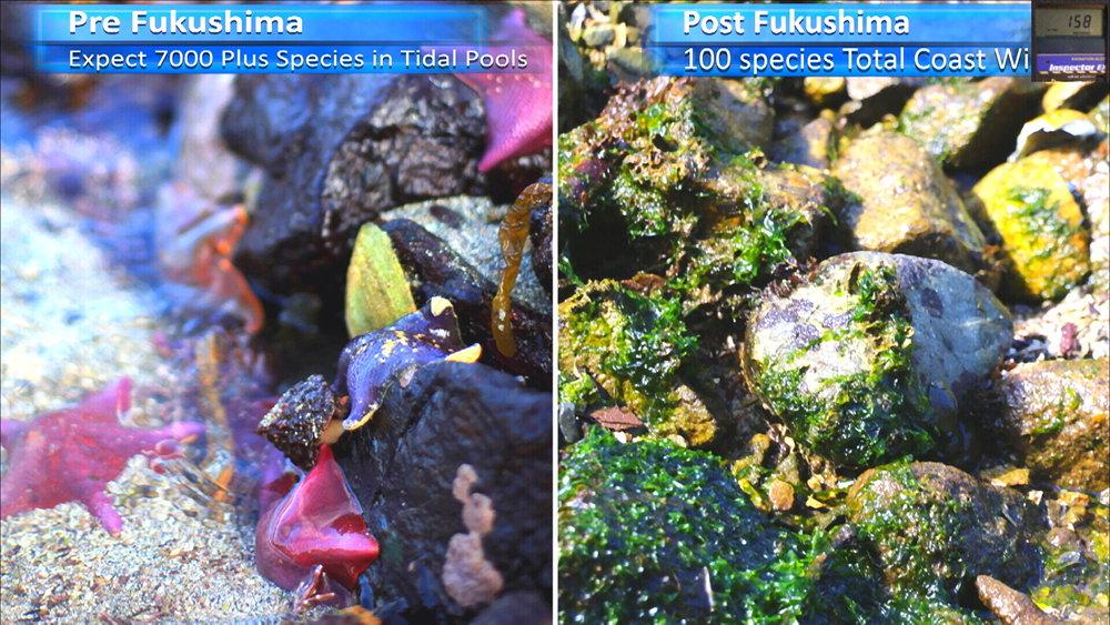 Fukushima Story 257.jpg