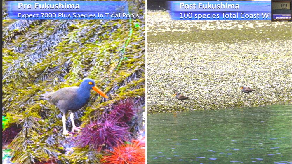 Fukushima Story 259.jpg