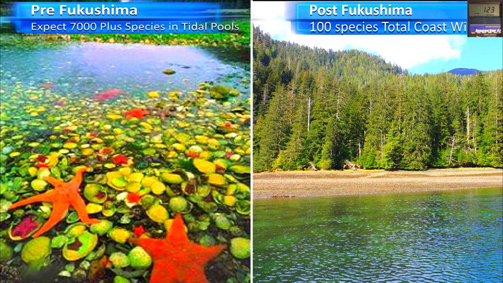 Fukushima Story 261.jpg