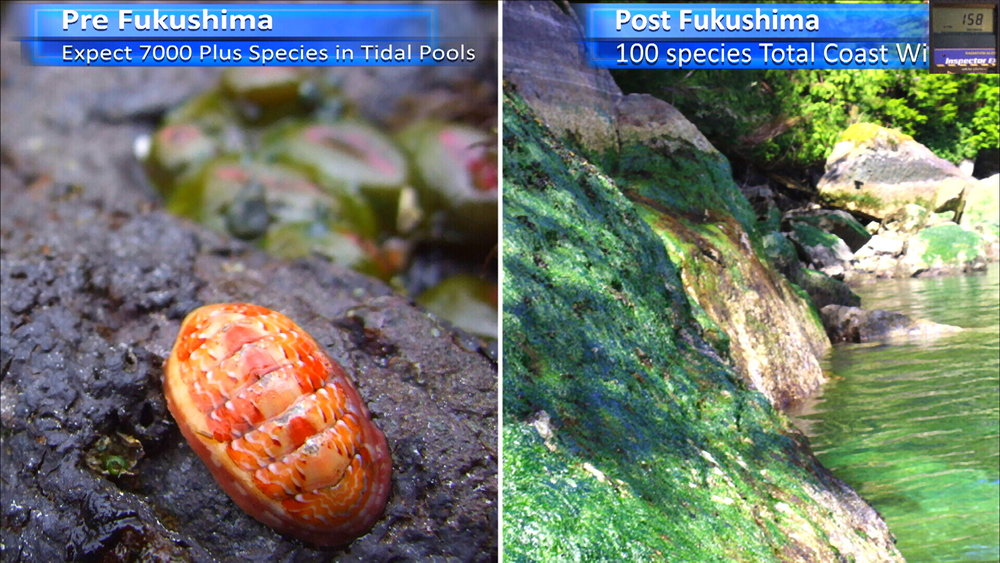 Fukushima Story 262.jpg