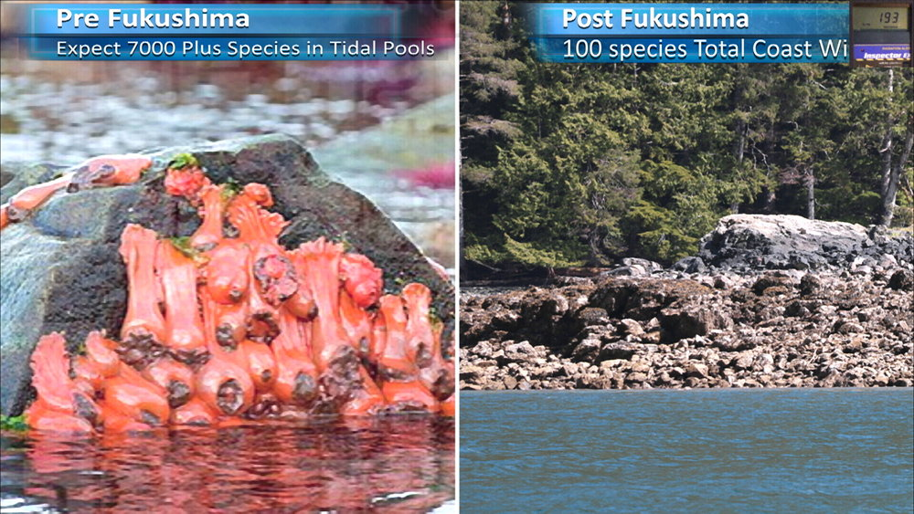 Fukushima Story 277.jpg