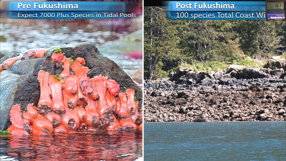 Fukushima Story 278.jpg