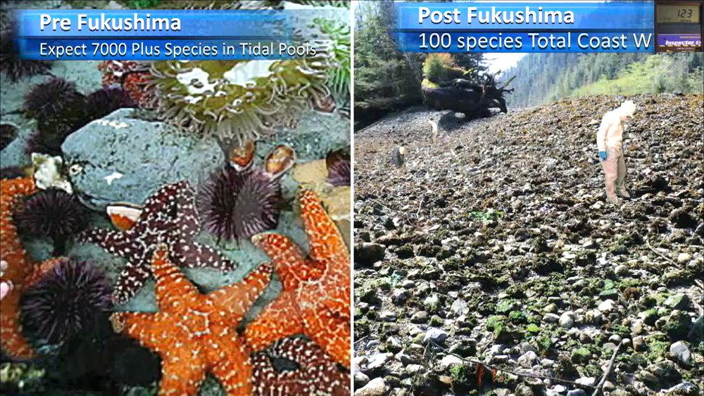 Fukushima Story 331.jpg