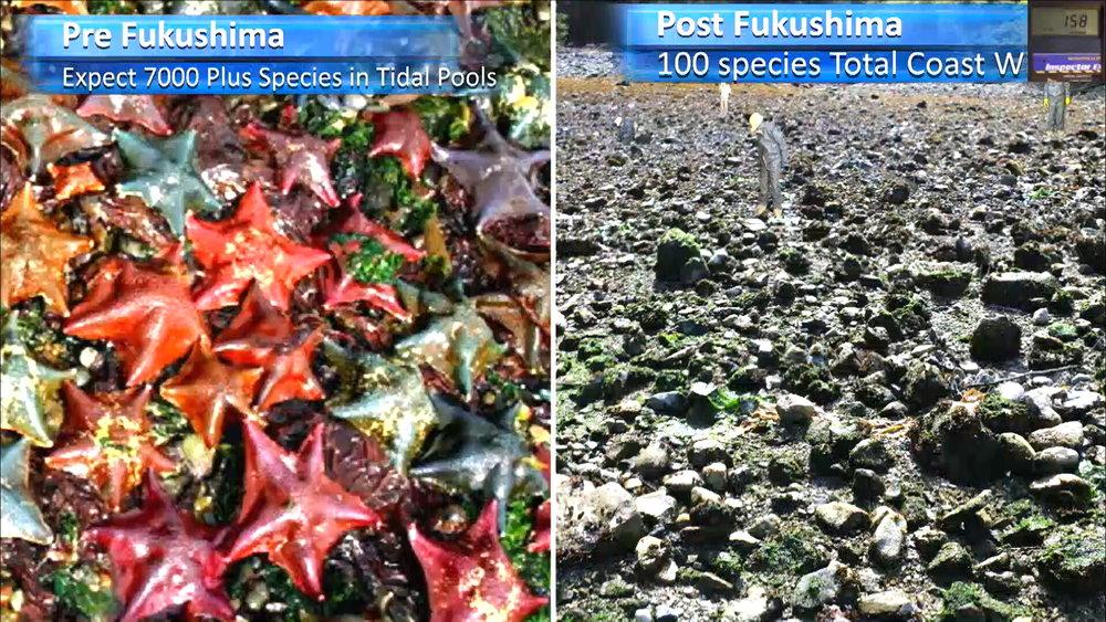 Fukushima Story 332.jpg