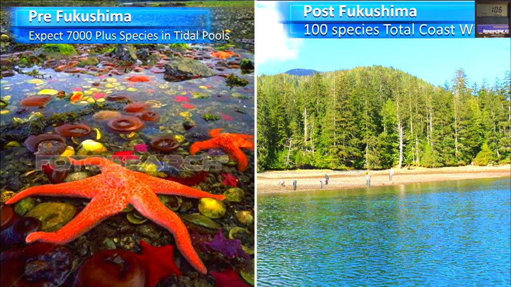 Fukushima Story 333.jpg