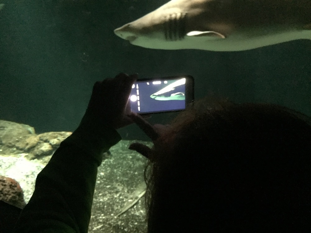 Here's my picture, of Missy taking a picture, of a shark.