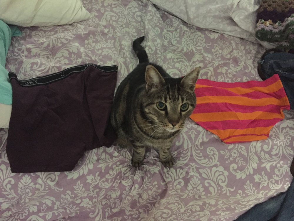 Two pairs of my underpants.  Technically only one pair is a pair of panties.  Cat (Yang) included for size comparison.  Which I suppose is a form of refangulation itself, so, a double!