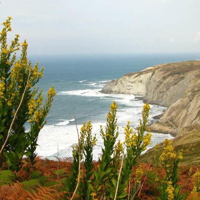 Aprende a surfear o perfecciona tu técnica en esta exclusiva escuela de surf. Acampa en el municipio de Sopelana y asómate en Mundaka a la desembocadura de río más increíble de toda Europa.