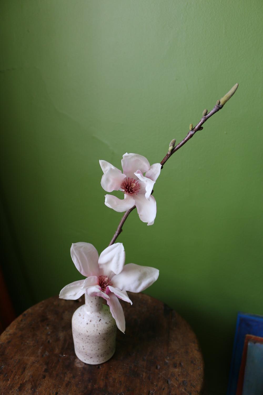 tulipmagnoliacorner.jpg