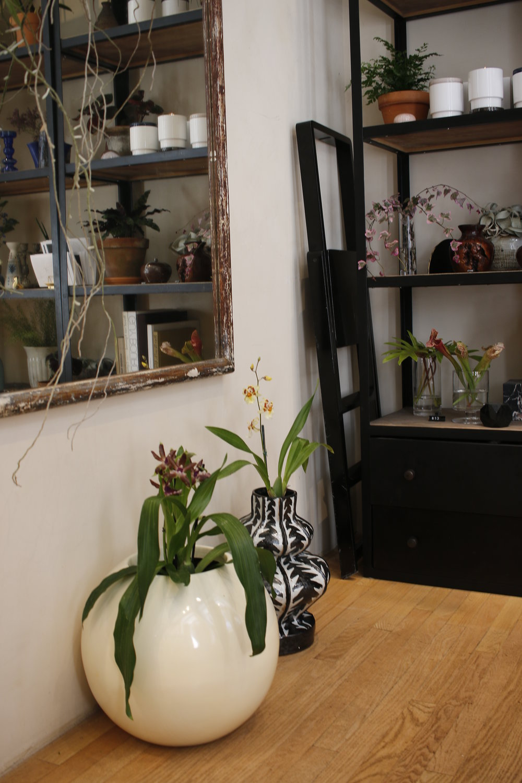 orchids2.jpg