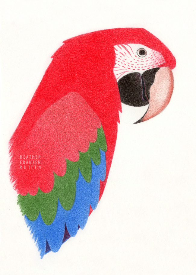 20170304 Macaw.png