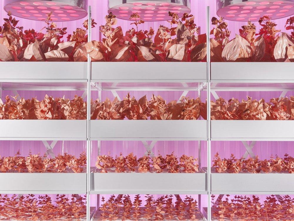 Selfridges, Radical Luxury, Propability, Growing Beauty VM1.jpg