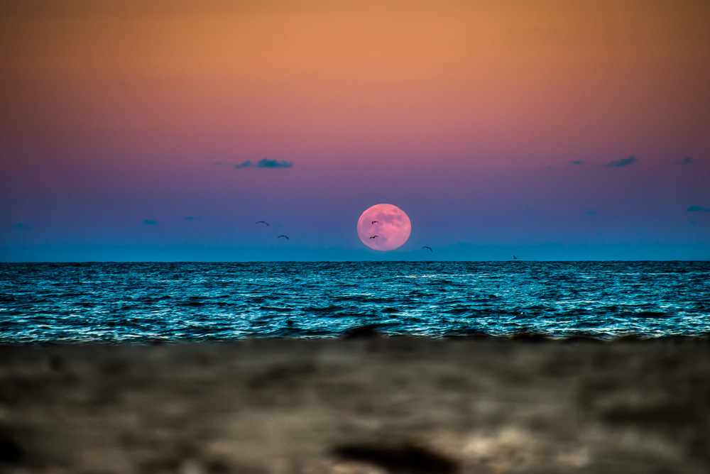 Moon Rise Migration