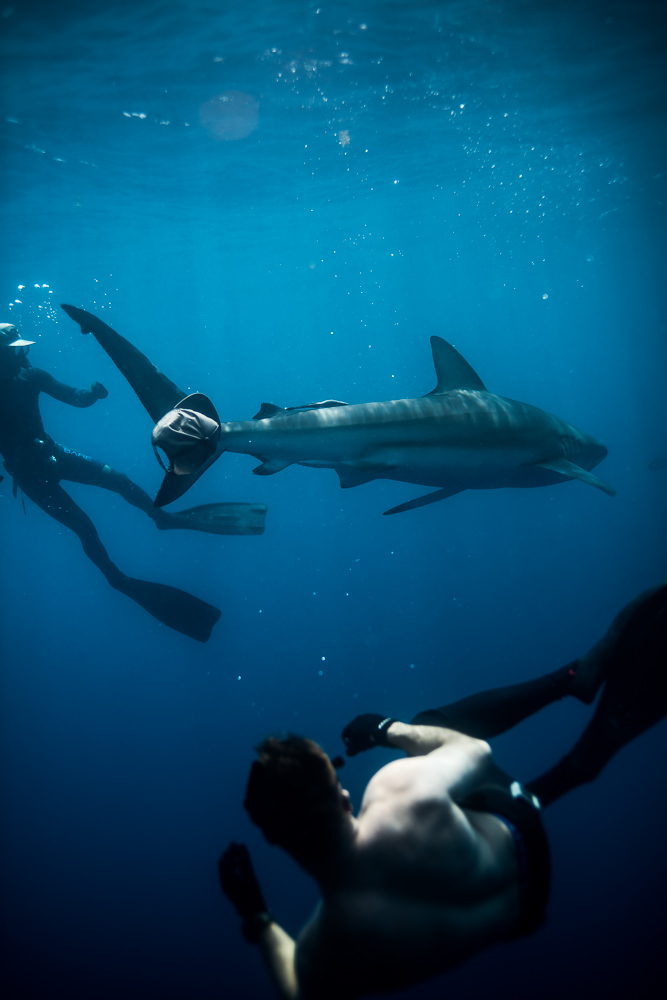 SharkaddictsFirstDive-1245.jpg