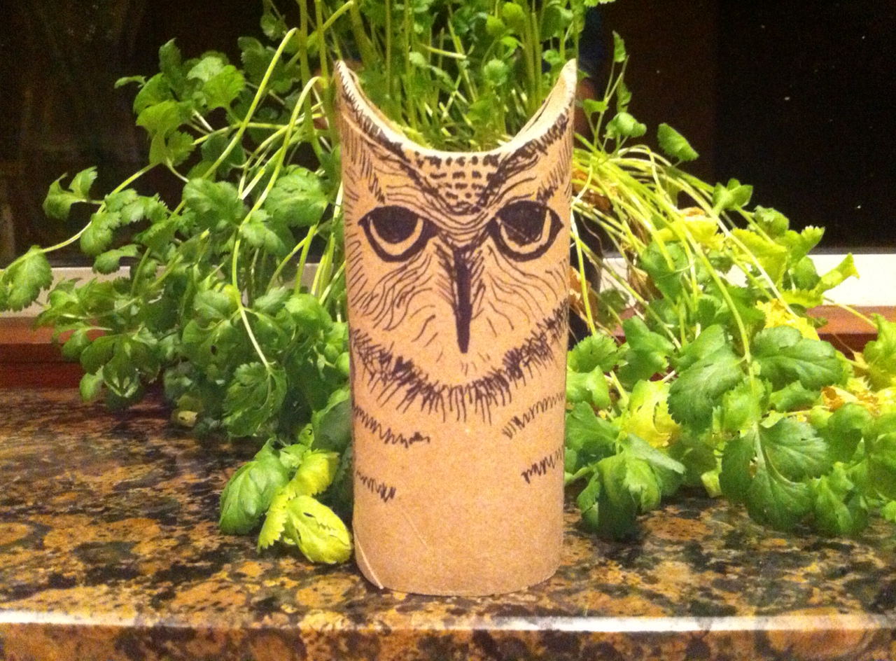 Owl toilet roll 1