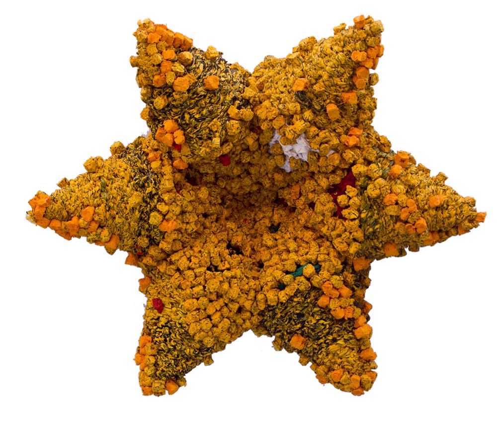 Untamed Star