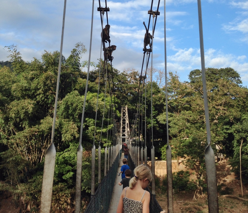 The family walking on a suspension bridge in Sri Lanka, with monkeys following along.