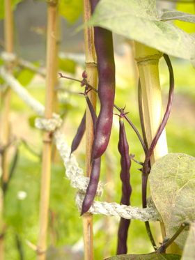 coco-beans.jpg