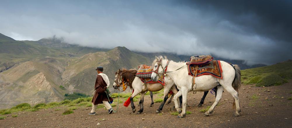 Horses of Mustang, Nepal