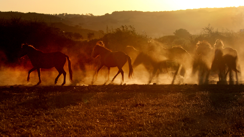 Horses on the island of Skyros, Greece. Photo: Jen Miller