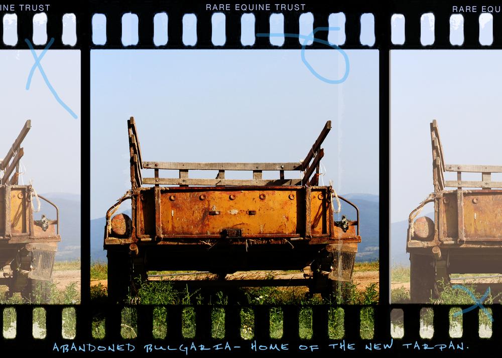 Tarpan web v gallery4.jpg