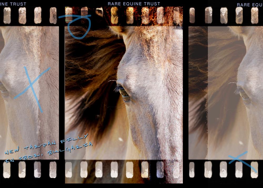 Tarpan web v gallery1.jpg