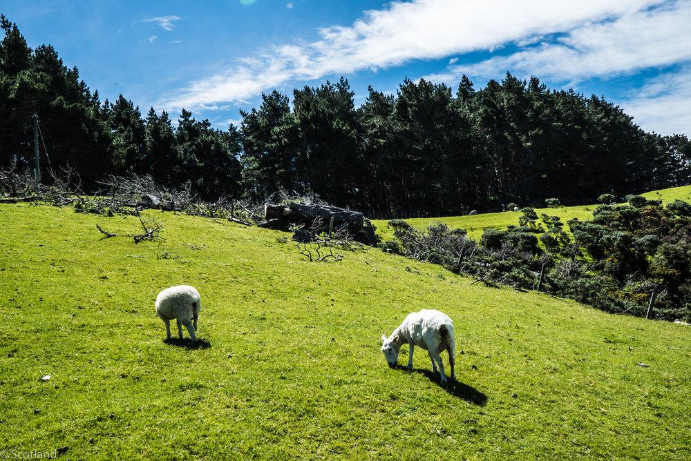 NZ_adventure_2016-27 2.jpg