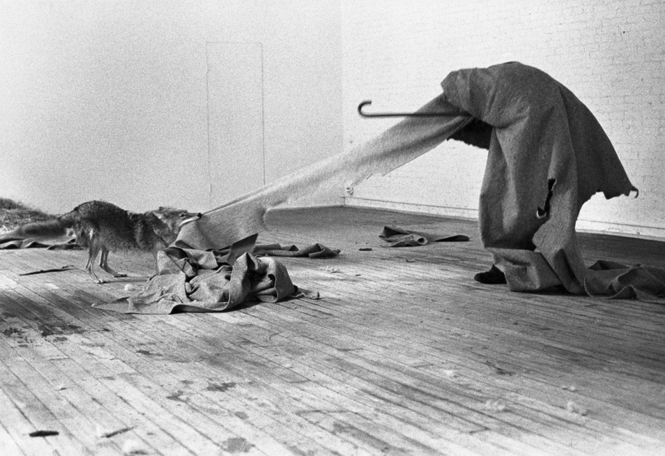 beuys and coyote