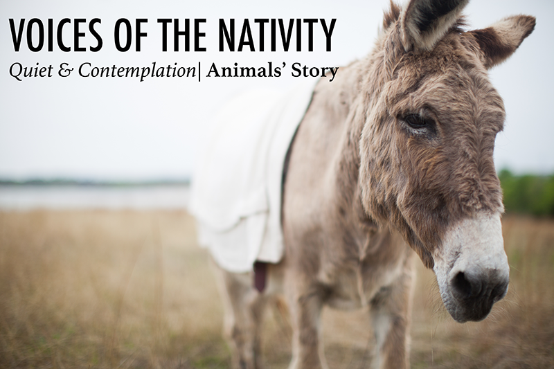 Voices of the Nativity - Quiet & Contemplation - small.png