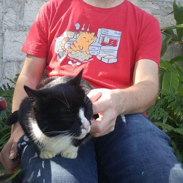 Hemmingway Cat, Key West, FL
