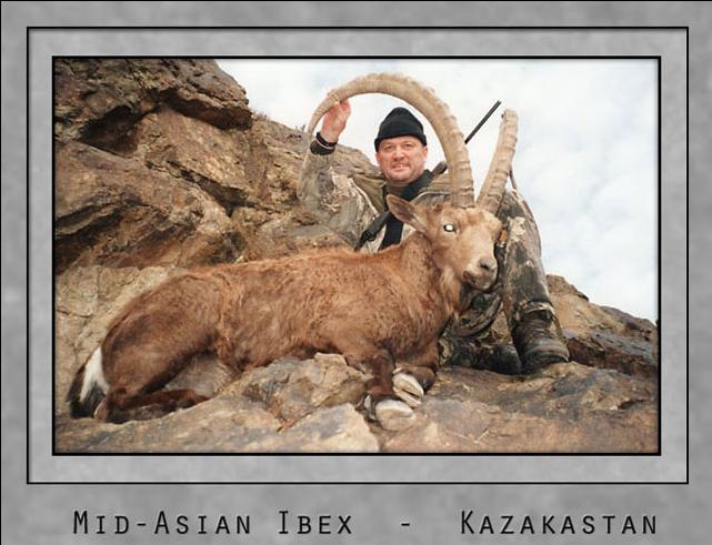 Mid-Asian Ibex.jpg