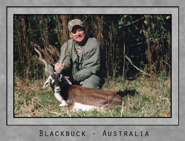Blackbuck.jpg