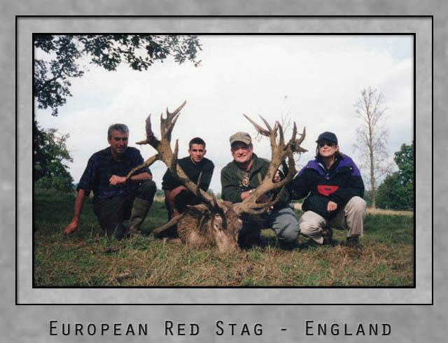 European Red Stag.jpg