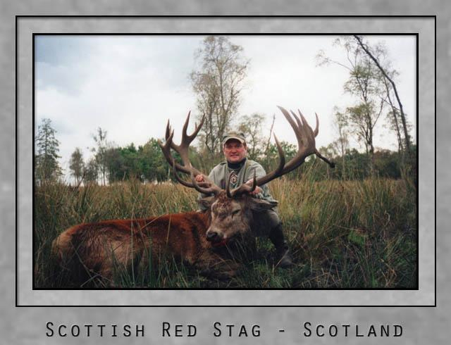 Scottish Red Stag.jpg