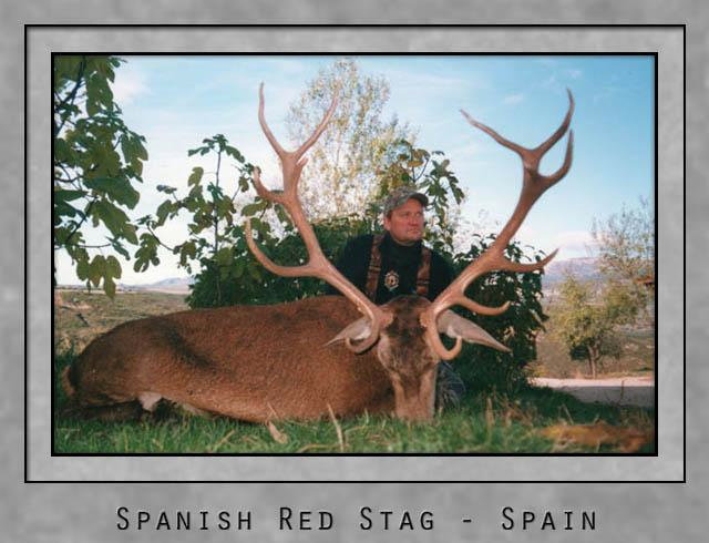 Spanish Red Stag.jpg
