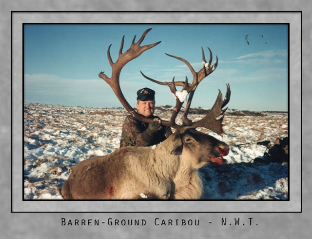 Barren Ground Caribou.jpg