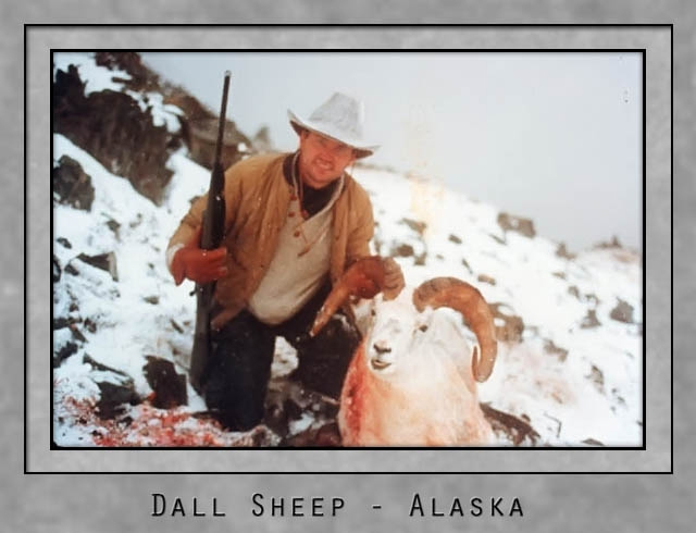 Dall Sheep Alaska.jpg