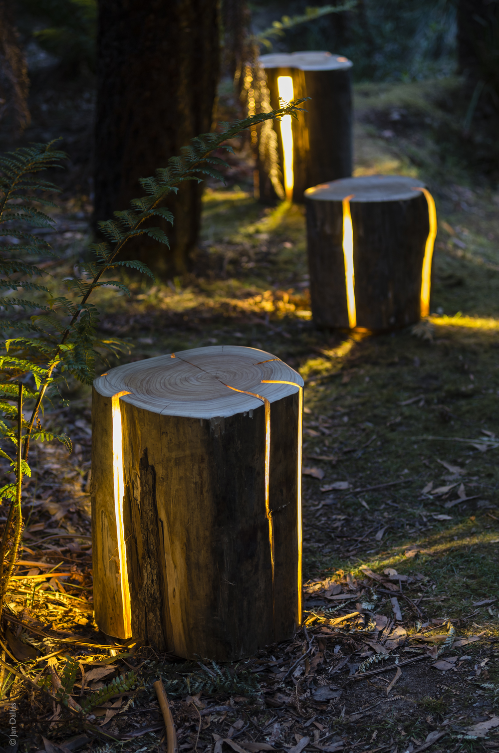 LAMP2-STUMP-DuncanMeerding-photoJanDallas1.jpg