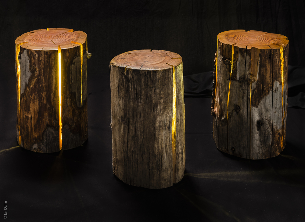 LAMP2-STUMP-DuncanMeerding-photoJanDallas3.jpg