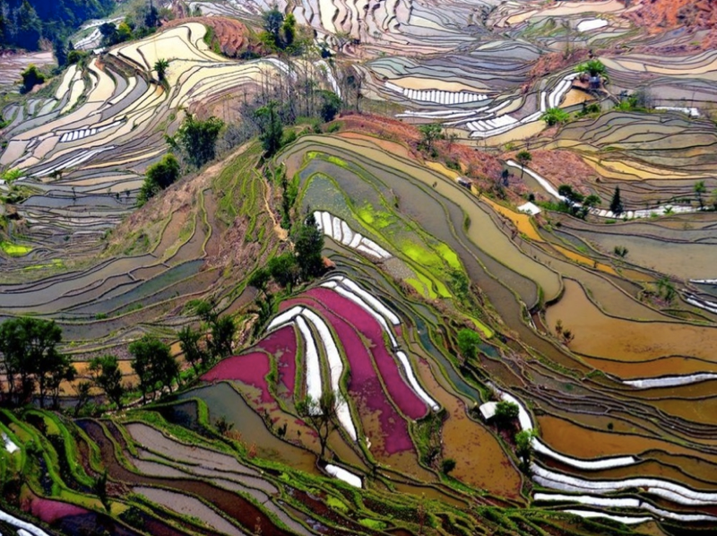 Rice terraces in Yuangyang, China
