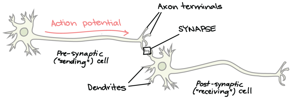 Чтобы понять концепцию, внедрить практику и получить опыт, нужно чтобы несколько нейронов образовали между собой связь. Весь опыт — это набор таких связей. Если просто что-то бегло прочитать, то связь будет неустойчивой.  Академия Хана рассказывает об этом на пальцах, но по-английски