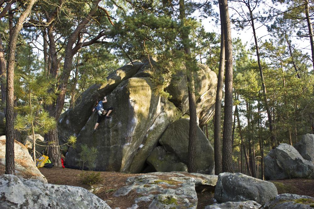 Fontainebleau_2015.jpg