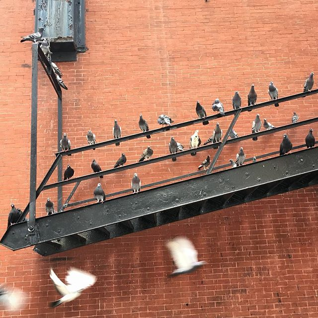 City life for all. #birds #citylife #urban #streetphotography #diagnol #flight
