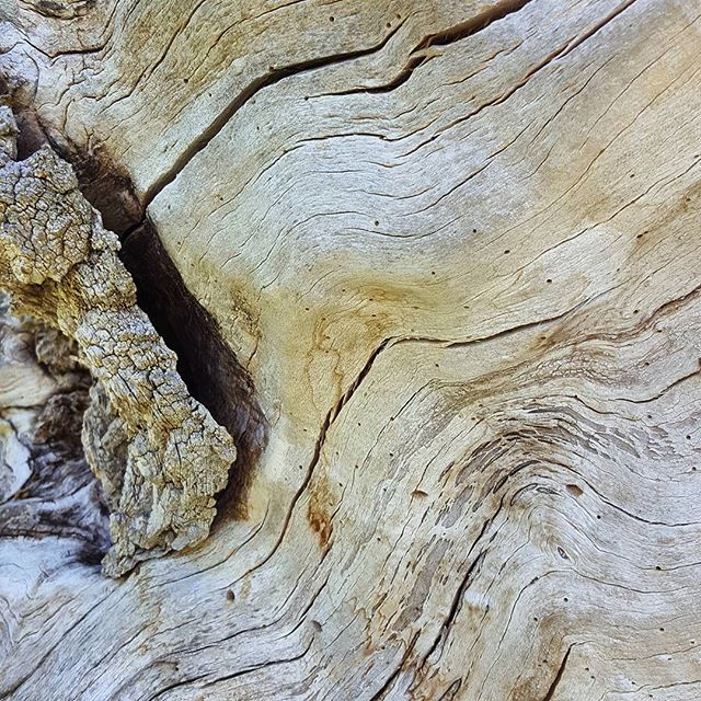 Beauty is a stump. #wood #tree #grain #berkshires #waves #sculptural #inspiration